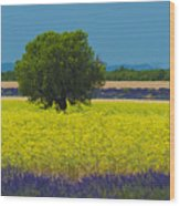 Lavender And Colza In Summer, Provence, France Wood Print