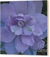 Lavender Blue Wood Print