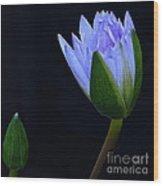 Lavender Delight Wood Print