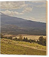 Lavender Farm Panorama Wood Print