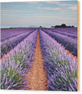 Lavender Field In Blossom Wood Print