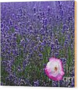 Lavender Field With Poppy Wood Print