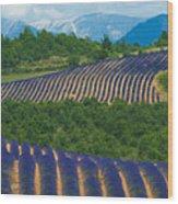 Lavender Fields, Provence, France Wood Print