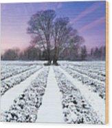 Lavender In Winter Wood Print