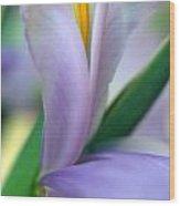 Lavender Iris Wood Print