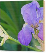 Lavender Iris On Green Wood Print