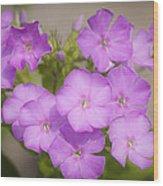 Lavender Phlox Wood Print