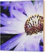 Lavender Senetti Wood Print by Lessie Heape