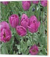 Lavender Tulips Wood Print