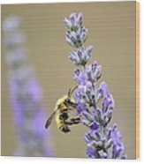 Lavender Visitor Wood Print