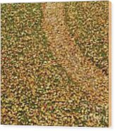 Lawn Covered With Fallen Leaves Wood Print