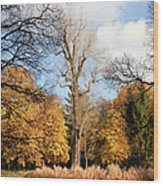 Lazienki Park Autumn Scenery Wood Print