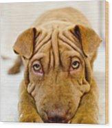 Lazy Dog Wood Print