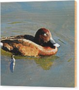 Lazy Duck Days Wood Print