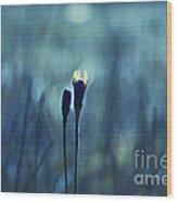 Le Centre De L Attention - Blue S0203d Wood Print by Variance Collections