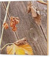 Leaf And Old Wood Fence Wood Print