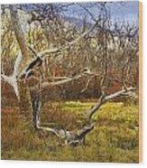 Leaf Barren White Tree Trunk In California No.1500 Wood Print