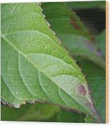 Leaf Blemish Wood Print