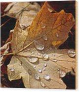 Leaf Doplets Wood Print by LeeAnn McLaneGoetz McLaneGoetzStudioLLCcom