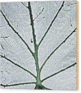 Leaf Hortus Botanicus, Close-up Wood Print