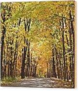 Leaf Lit Path Wood Print