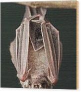 Leaf-nosed Bat Phyllostomidae, Amazon Wood Print