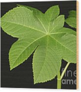 Leaf Of Castor Bean Plant Wood Print
