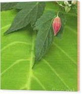 Leaf On Leaf With Red Bud Wood Print