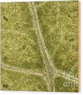 Leaf Vascularization Wood Print