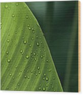 Leaf With Water Drops, Barro Colorado Wood Print