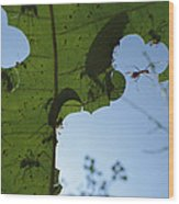 Leafcutter Ant Atta Columbica Workers Wood Print