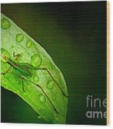Leafhopper 2 Wood Print