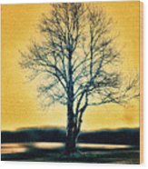 Leafless Tree Wood Print