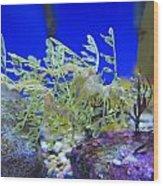 Leafy Seadragon Phycodurus Eques At The Wood Print by Stuart Westmorland