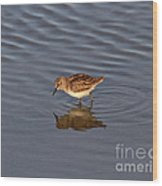 Least Sandpiper Wood Print