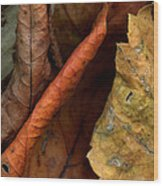 Leaves After Braque Wood Print