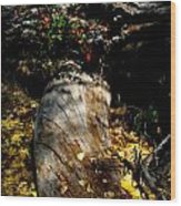 Leaves Around The Tree Trunks Wood Print