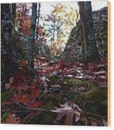 Leaves In The Forest Wood Print