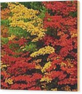 Leaves On Trees Changing Colour Wood Print