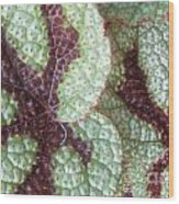 Leaves With Beautiful Texture Wood Print