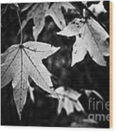 Leaves Without Color Wood Print