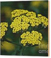 Lemon Lace Wood Print