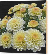 Lemon Meringue Chrysanthemums Wood Print