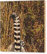 Lemur Tail Wood Print