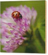 Lensbaby Ladybug On Pink Clover Wood Print