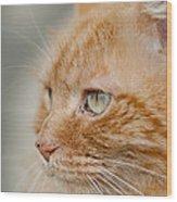 Leo The Kitty Beast Wood Print
