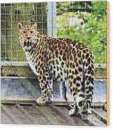 Leopard 3 Wood Print