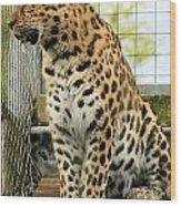 Leopard 5 Wood Print