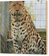 Leopard 6 Wood Print