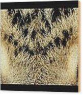 Leopard Eyes Wood Print